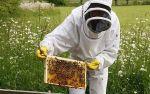 ilustrační obrázek - včelař