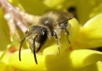 ilustrační obrázek včela na květu